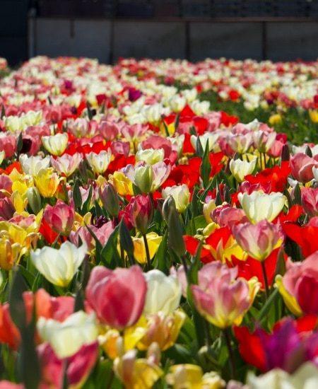 mf-case-bloemen-image-2
